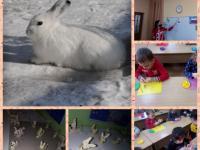 Бабу снежную собрали, Варежки украсили. Зайку белого слепили, И про снег мы не забыли!!!